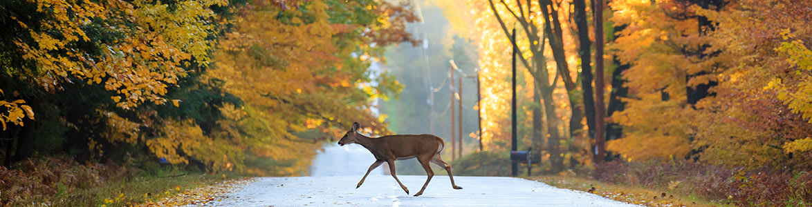 You Can't Live Without Our Deer Season Motorcycle Safety Tips, StreetRider Insurance, Ontario