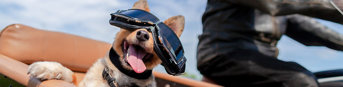 The Truth About Riding with Your Dog on Your Motorcycle, StreetRider Insurance, Ontario